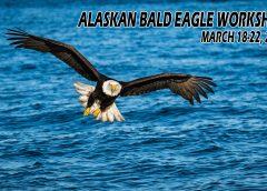 Alaskan Bald Eagle Workshop